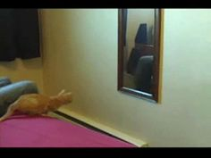 おもしろい猫のgif動画貼ってくwwwwwwww:ハムスター速報