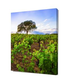 Sonoma Valley Print, California Landscape, Countryside Fine Art, Oak Tree, Vineyard Canvas Wrap, Extra Large Photograph, Rustic Home Decor by SusanTaylorPhoto on Etsy