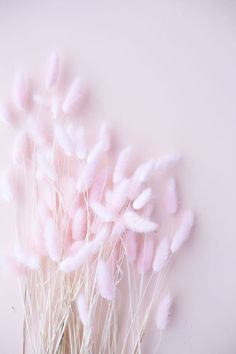 DescriptionDried bunny tails (also known as lagurus grass) is perfect for home decor or making floral arrangements. It's a stunning addition to a centrepiece. People enjoy styling it for weddings as it can be cost-effective by putting it in smal. Flower Phone Wallpaper, Flower Background Wallpaper, Flower Backgrounds, Pink Wallpaper, Iphone Wallpaper, Aesthetic Pastel Wallpaper, Pink Aesthetic, Aesthetic Wallpapers, Dried Flowers