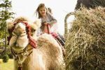 Church offers Camel Rides with Live Nativity http://studentcenternews.com/2014/12/24/on-christmas-eve-at-stonebridge-church-families-experienced-the-nativity-scene-firsthand-with-real-sheep-goats-a-donkey-and-a-camel-named-larry-hes-the-best-camel-in-texas/