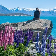 lupins along Lake Tekapo in New Zealand! (Note - we went here in December 2015 and Lake Tekapo looked nothing like this picture. The lake was not brilliantly blue and the lupins were sparse, dried out, and sad-looking.)