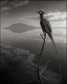 Stonebird2