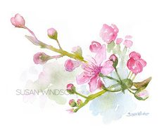 Cherry Blossoms watercolor giclée reproduction. Landscape/horizontal orientation. Printed on fine art paper using archival pigment inks. This quality printing allows over 100 years of vivid color in a