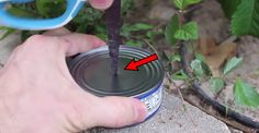 He Cut a Hole in a Can of Tuna. The Result? This Could Save Your Life Someday!
