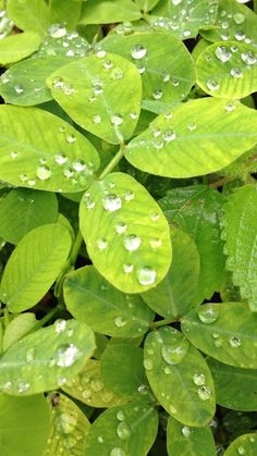 Wet Leaves [3 pics] | See More Pictures | #SeeMorePictures