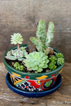 lemonsandanchovies.com wp-content uploads 2015 11 Succulents-in-a-Talavera-Pot.jpg