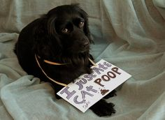 Dog Shaming features the most hilarious, most shameful, and never-before-seen doggie misdeeds. Join us by sharing in the shaming and laughing as Dog Shaming reminds us that unconditional love goes both ways. Weird Pictures, Funny Animal Pictures, Funny Animals, Cute Animals, Amazing Pictures, Funny Photos, Cat Shaming, Funny Signs, Dog Signs