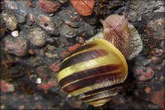 Tiny snail by jogod,341