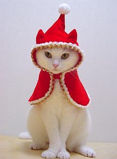 He doesn't seem to mind being Little Red Riding Hood!