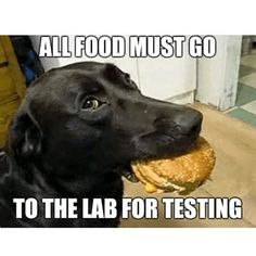 These funny dogs and cats are on a undertaking to make you smile.See more ideas about Funny animals, Dog cat and Cute animals.Read This Top 24 Funny Cats and Dogs Funny Animal Jokes, Funny Dog Memes, Cute Funny Animals, Animal Memes, Cute Baby Animals, Funny Cute, Funny Dogs, Funny Dog Sayings, True Memes