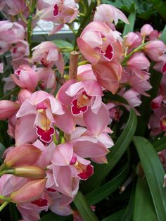 orchids, Photo by Melissa Jacob