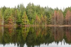 Take a Hike: Whyte Lake in West Vancouver