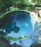 『柿田川公園(湧水)  』静岡県