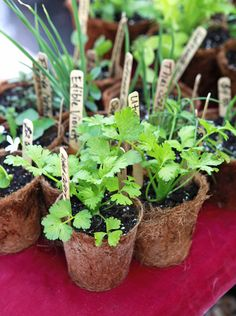 Planting Guide—find out when to plant seedlings for your region. Includes a worksheet!