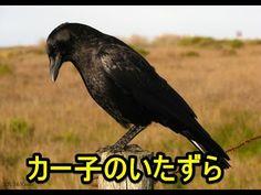カー子のいたずら / 動物【感動する話】