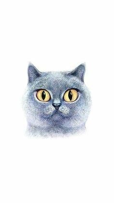 The sketch cats Ios 7 Wallpaper, Wallpapers, Simple Icon, Kawaii, Beautiful Images, Kittens, Photo Wall, Bird, Gallery