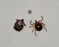 Tick Tubes are one of my favorite tick-prevention devices. They're cardboard tubes filled with cotton balls soaked in a pesticide called permethrin that's… Tick Tubes, Garden Pests, Take Out, Rodents, Ticks, Insects