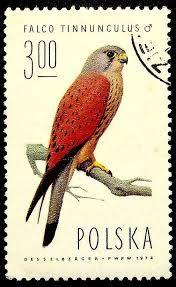 Resultado de imagen de pinterest Falco tinnunculus