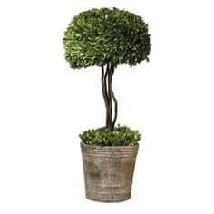 Check out the Uttermost 60095 Preserved Boxwood Tree Topiary Planter priced at $213.40 at Homeclick.com.