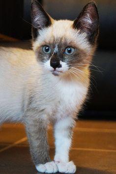Cute or not ?#kitty #kitten #cat