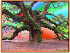 Majestic Tree.  If this is the same one, I saw this in Charleston, SC.