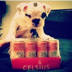 Who's guarding your Celsius stash?