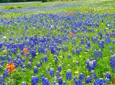 Field of Wildflowers | Field of Wildflowers | Flickr - Photo Sharing!