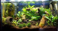¿Qué es un acuario biotopo? - http://www.depeces.com/que-es-un-acuario-biotopo.html