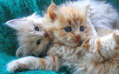 kittens- so adorable.....