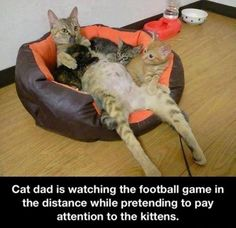 Cat dad and football