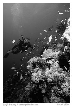 coral reef black and white - Google Search