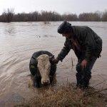 """Големи райони в България за втори път тази година са под вода. Отнесени мостове, наводнени домове, удавени домашни животни – Потопът е демо-версия, но достатъчен, за да предизвика социално бедствие в една бедна и прогресивно обедняваща държава. Потопът не влиза по никакъв начин в предизборните планове на властващата върхушка, освен като потенциален следизборен лозунг: """"… след нас и Потоп"""". А той взе, че дойде още преди това. Снимка: Старият мост www.stmost.info"""
