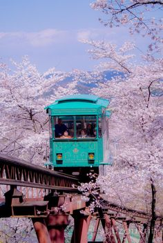 Japan. Love the bursts of color. Turquoise and purple!!!