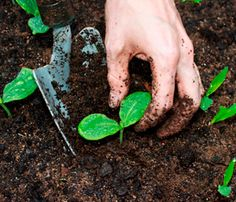 How Soil Can Save the Planet: Q with John Jeavons via @Books for Better Living