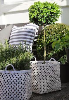 Garden Fresh Ideas