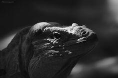 Was für ein Tier by meyer werner on Animals, Animales, Animaux, Animais, Animal