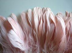 Beautiful Pink Feathers...