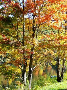 Fall along Clarion River