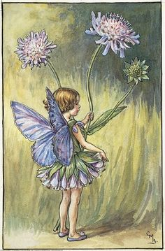 Illustration for the Scabious Fairy from Flower Fairies of the Summer. A small girl fairy stands half-turned towards the rear, holding scabious flowers in her left hand and plucking at her skirt with her right. Author / Illustrator Cicely Mary Barker