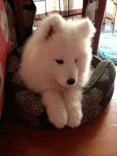 so cute dogs gif. more here