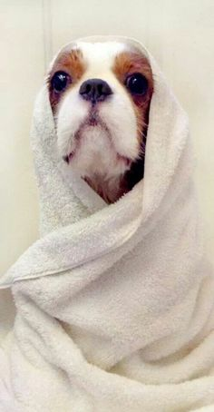 Obi Wan Cavalier, haha
