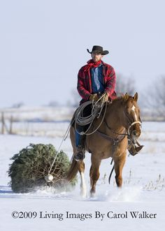 Cowboy and his horse pulling a Christmas Tree in the snow. We used to do this Christmas Horse Learn about #HorseHealth #HorseColic www.loveyour.horse