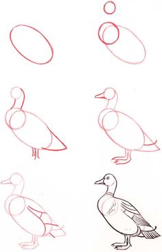 Easy Drawings Drawing-Tutorial-for-Occasional-Artists - While there are tons of things out there to draw, it is not simple always. However, these Drawing Tutorial for Occasional Artists will help you out. Bird Drawings, Pencil Art Drawings, Art Drawings Sketches, Animal Drawings, Easy Drawings, Drawing Animals, Art Illustrations, Drawing Lessons, Drawing Techniques