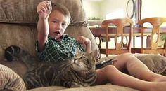 Hero Cat Saved a Boy's Life, and Now She's Throwing the First Pitch   The Good News - Yahoo Shine