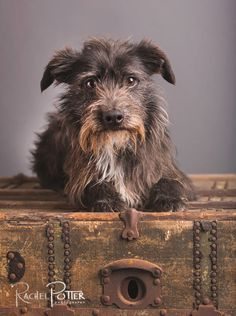 Pet Photography: Q and A- Focus and Lenses @mirandawebster look it's an older tucker