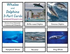 In Our Pond: Dolphins and Whales 3-part Cards
