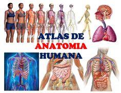 Atlas de anatomia humana edwin ambulodegui