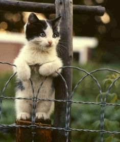 Cute Kitten Standing Up cute animals cat kitten fence kitty cute animals standing