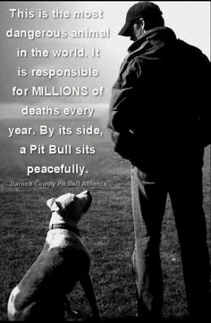 They are one of the most abused breed and the most understood breed! Adopt a Pit Bull today!