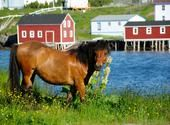 Change Islands Newfoundland Pony Sanctuary @ Aviva Community Fund
